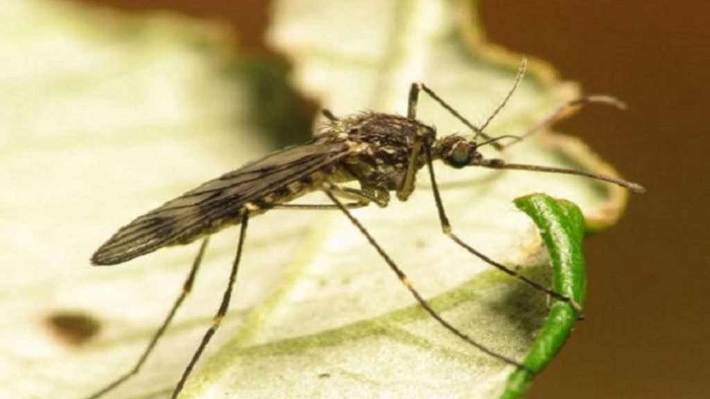 West Nile Virus Detected in Mosquito in Twin Falls County